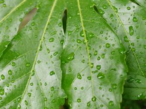梅雨のフリー素材リンク画像