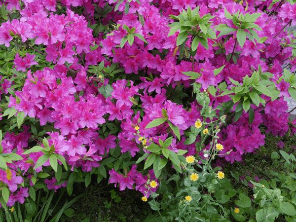 植物・花のフリー写真素材リンク画像