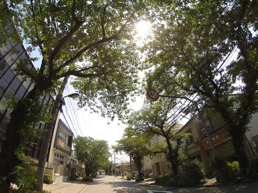 深緑の街路樹から木漏れ日