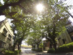 深緑の樹から強い木漏れ日