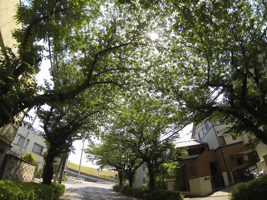 道路を覆う深緑の街路樹