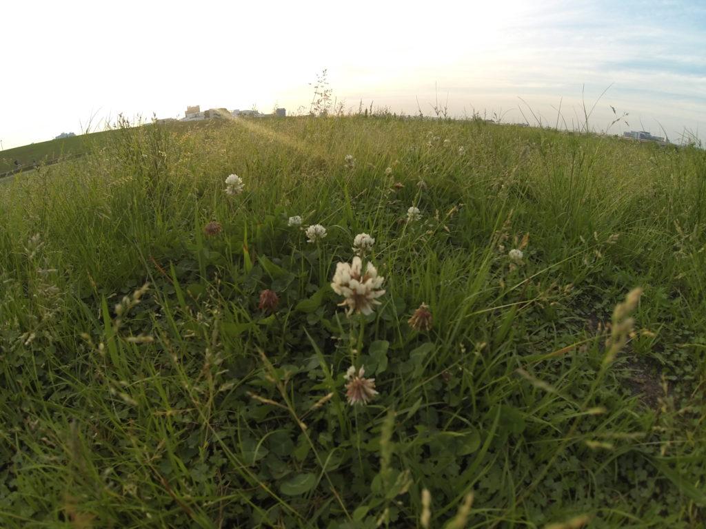夕方の芝生の上の雑草