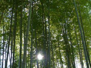 竹林の間から木漏れ日