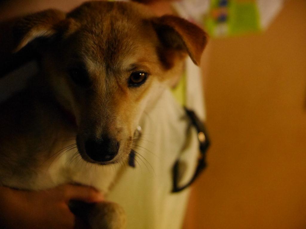 夕暮れの陰影が美しい犬