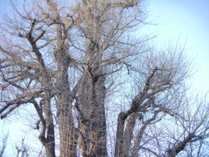 物凄い枝の多い樹