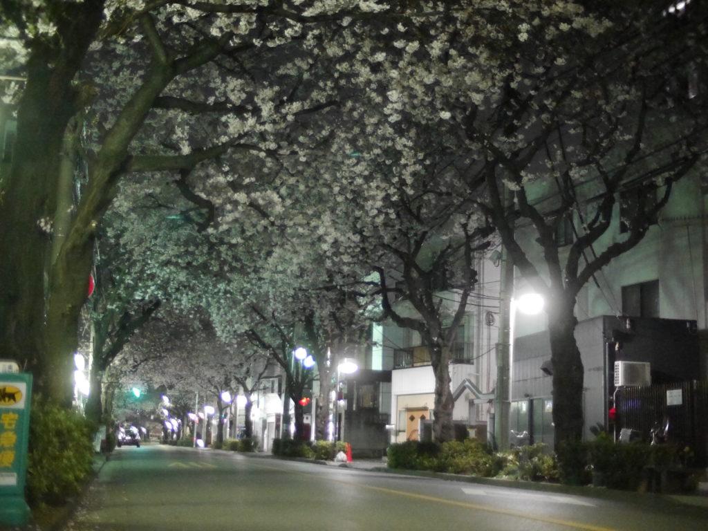 道路を覆うアーチのような夜桜