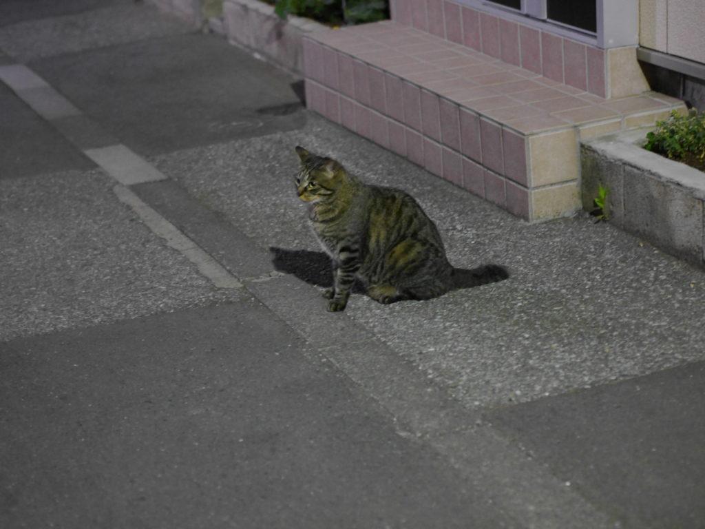 お座りした猫