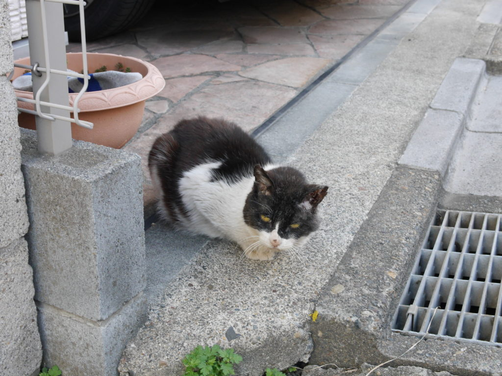 軒先に座る猫