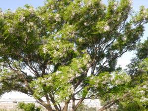 強風で揺れる樹木
