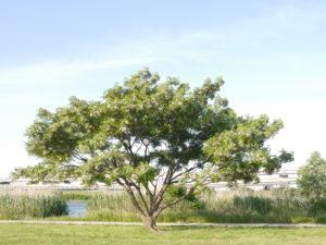 青空の下に凛と立つ樹木