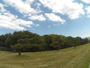 松の木と雲と青空