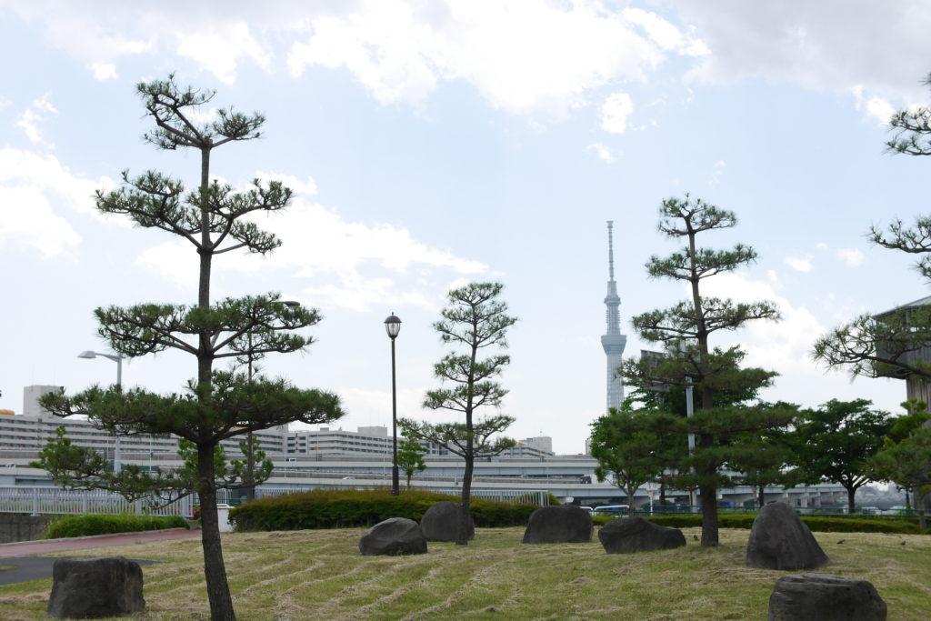 松の木とスカイツリー