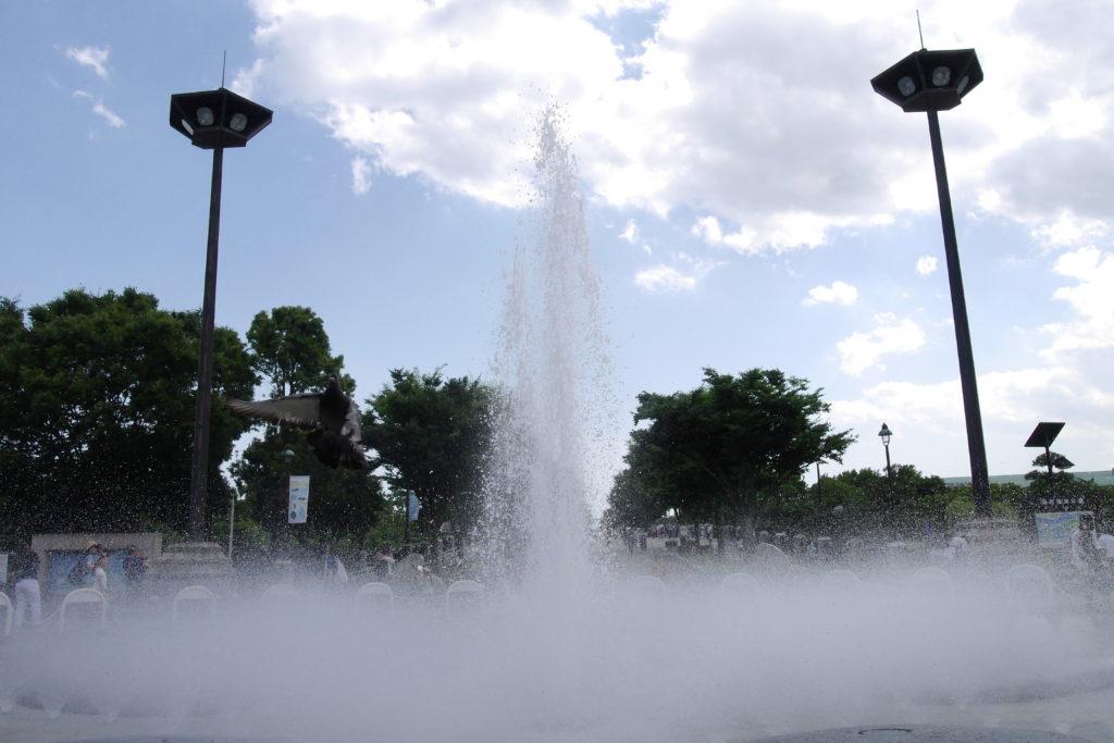噴水とよく見たら鳩