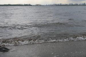 東京湾の波打ち際