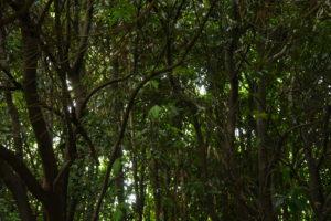 仄暗い森の中から