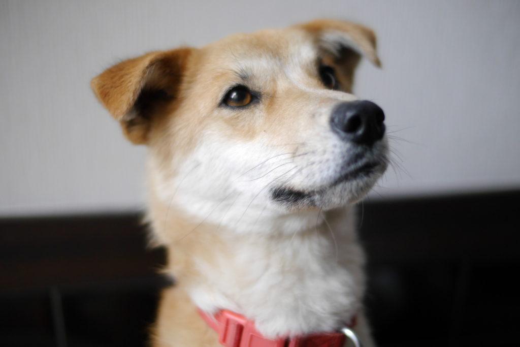 イケメンな犬の画像