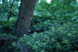 怪しい雰囲気の森