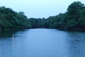 深い木々に囲まれた池
