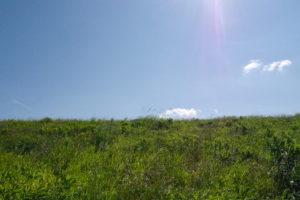 芝生と青空とフレア