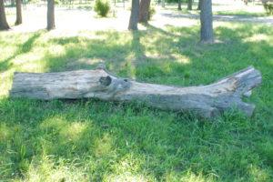 切り捨てられた木の幹