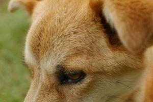 犬の毛並み接写