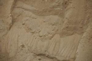 雨に濡れた土