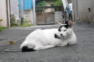 街中に居座る猫
