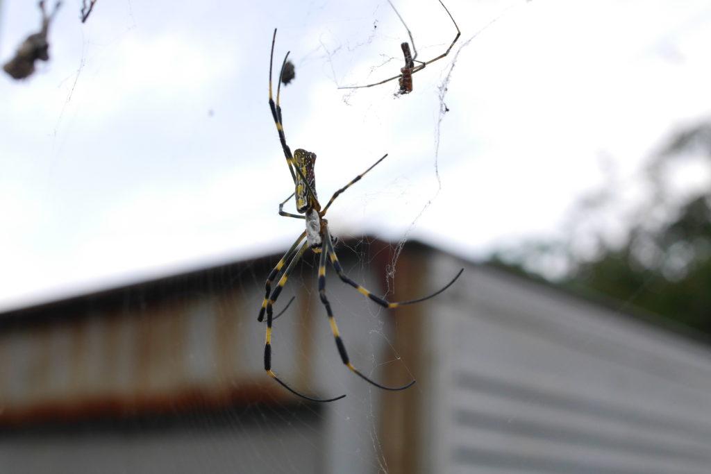 街角の蜘蛛